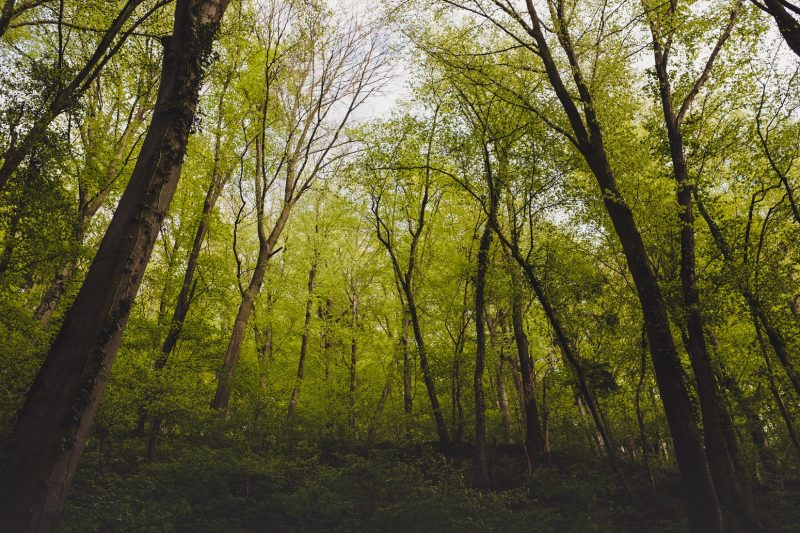 Green Planet Forest